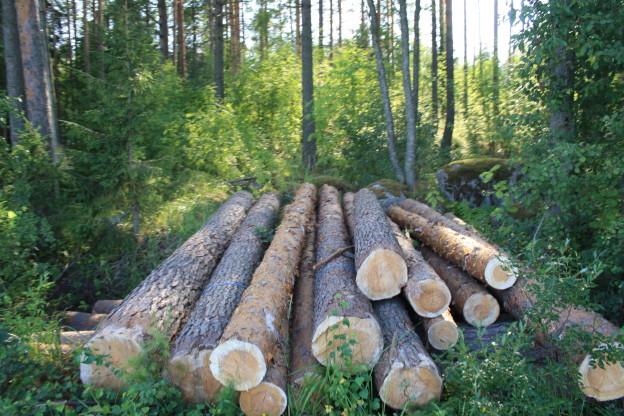 Metsäkoneenkuljettajia riittää kuljettamaan metsästä puut tehtaalle.