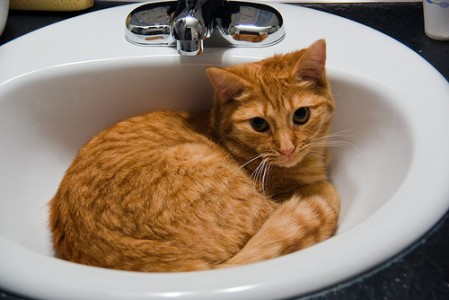 Kannattako kissa sijoittaa lavuaariin, siitä päätoimittaja ei ota kantaa. Pe Tor via photopin cc