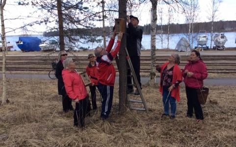 Suolahden Eläkkeensaajat ripustivat linnunpönttöjä urakalla.