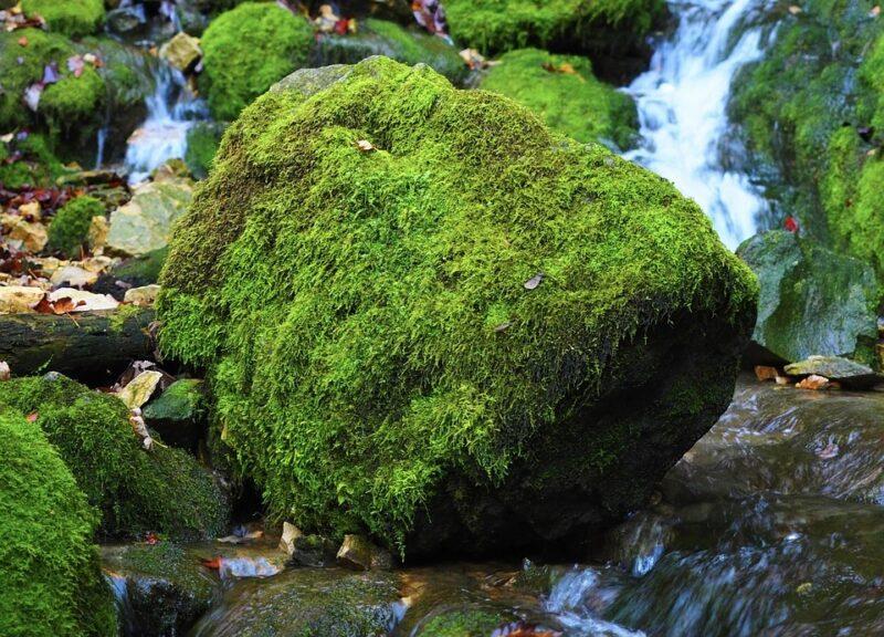Mielipide: Äänekoski-ilmiö – kehittyä vai näivettyä?